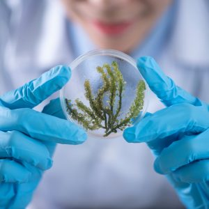 Biotecnologia: descubra o que é e quais os seus usos