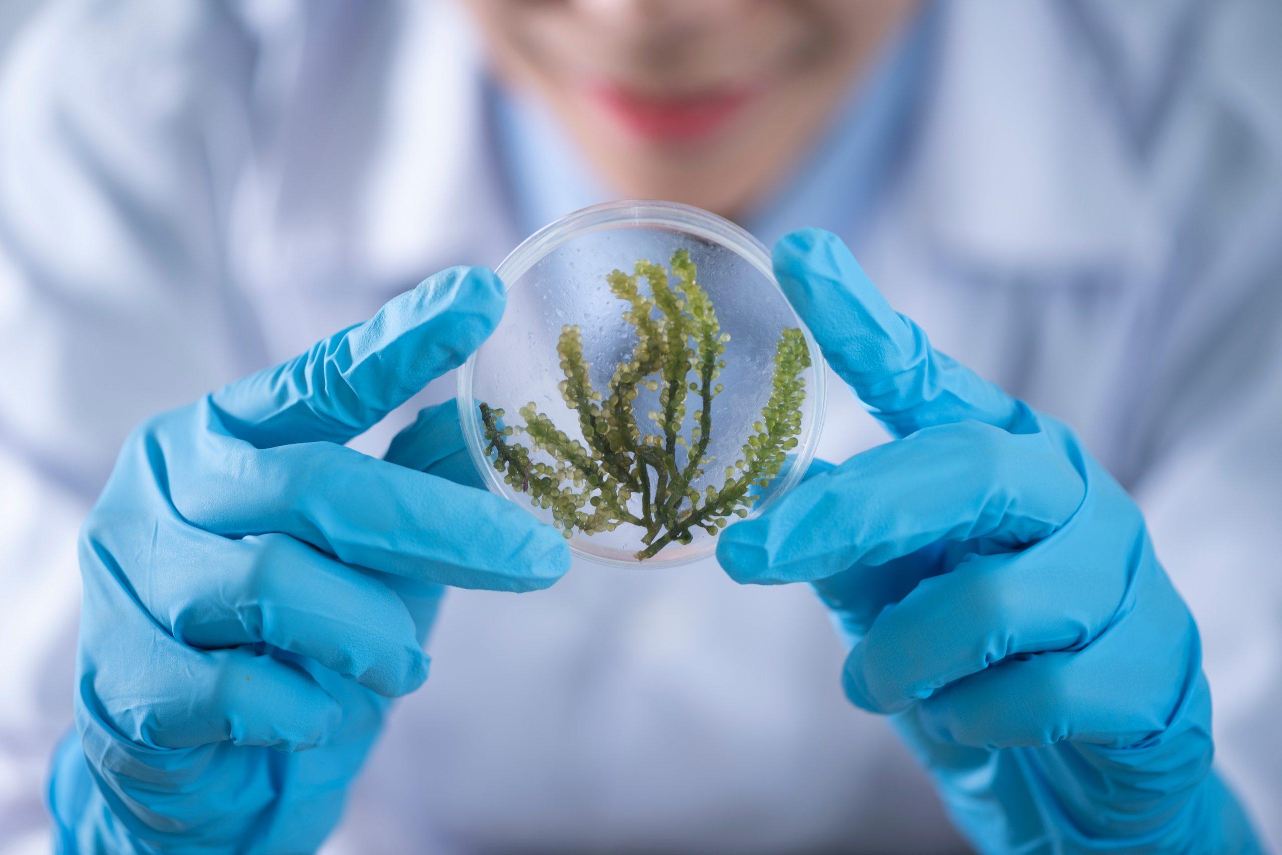 Cientista com jaleco branco, desfocado no fundo da foto. Suas mãos com luvas azuis está em destaque, segurando uma amostra de alguma planta.
